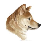 doge.png (PNG Image, 200×200 pixels)
